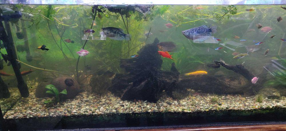 PILNE Duże akwarium z całym osprzętem i rybami Bystrzyca Kłodzka - image 1
