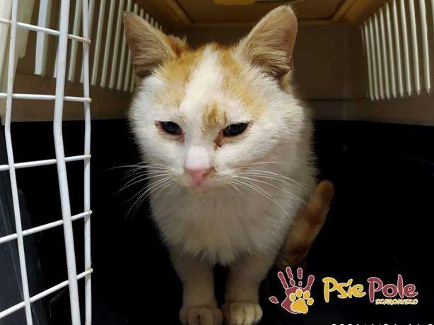 ZALANDO-Kochany mały niedożywiony kotek szuka troskliwego domu