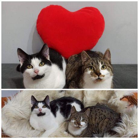 Cudowne kociaki do adopcji razam lub osobno