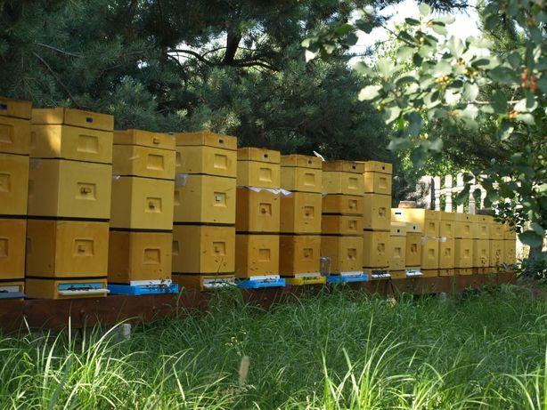 Sprzedam rodziny pszczele, rodzina pszczela, pszczoły, sklenar h47