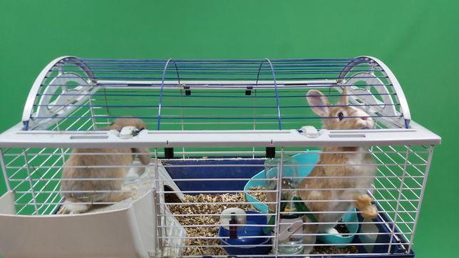Продам двух декоративных кроликов с клеткой и оборудованием