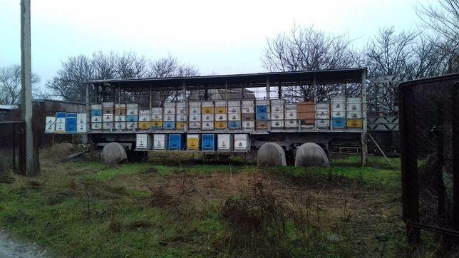 Прицеп пчеловодный для транспортировки 50ти пчелосемей