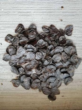 Подарую насіння гіпиків