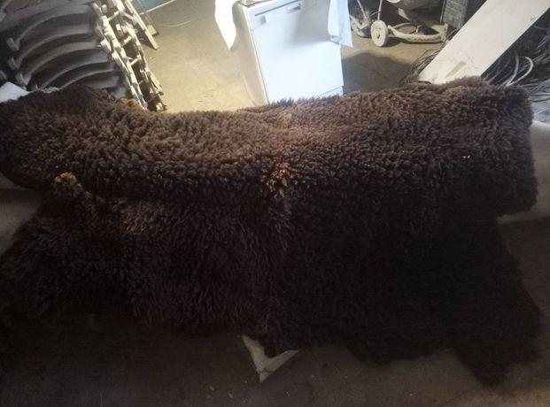Продам шкуру медведя и ламы (натуральные) в хорошем состоянии