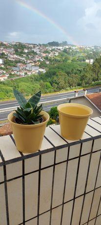 Caspotas de cerâmica para vasos