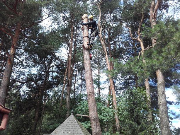 Wycinka Drzew - Darmowa Wycena.