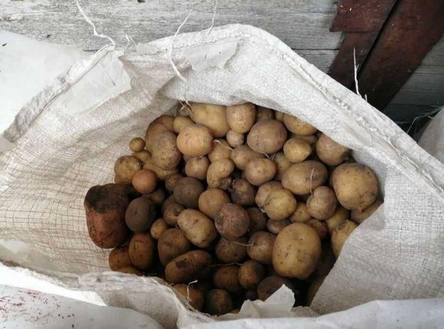 Продам дрібні картоплю. Картопля дрібна.