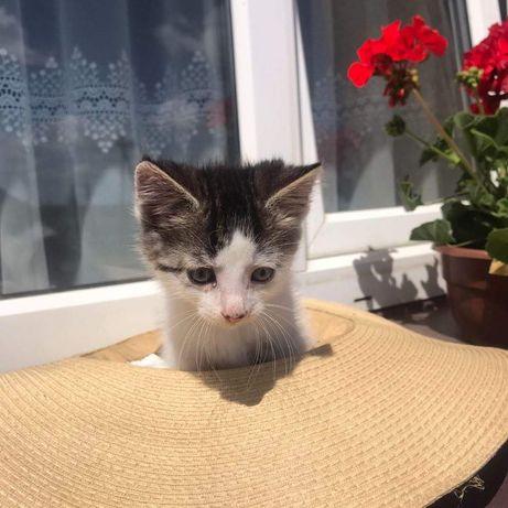 Małe kotki oddam( AKTUALNE)