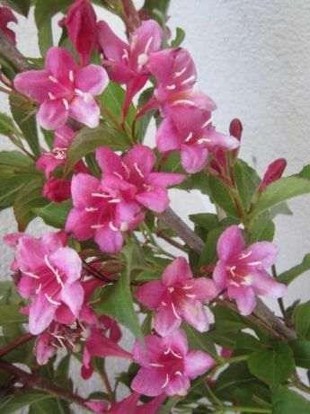 planta natural flor linda