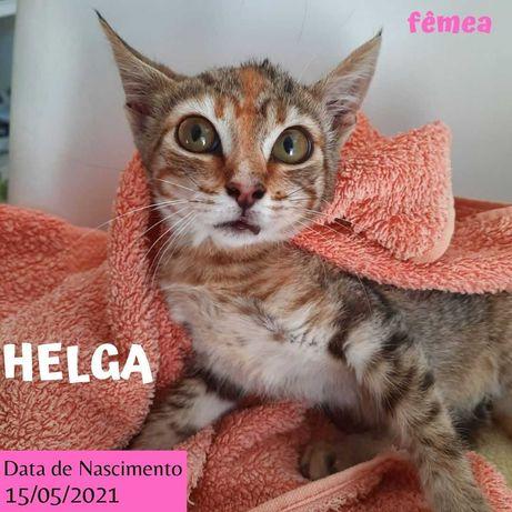 Gatinha 2 meses para adoção (Helga)
