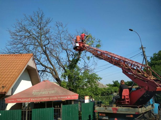 Срез деревьев, зачистка територии, порезка дров