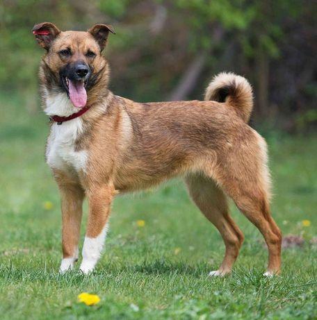 Шикарная молодая собачка Шастя ищет дом и семью
