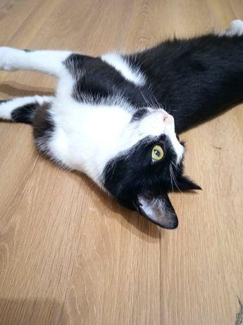 Wspaniała kotka szuka domu