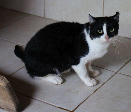 kotka czarno-biała -schronisko Wojtyszki -aktualne