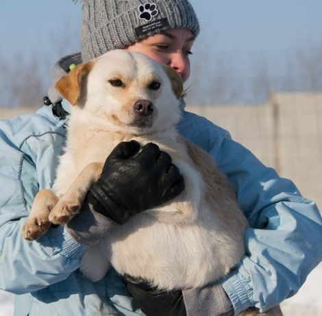 Молоденька собачка. Вже стерилізована