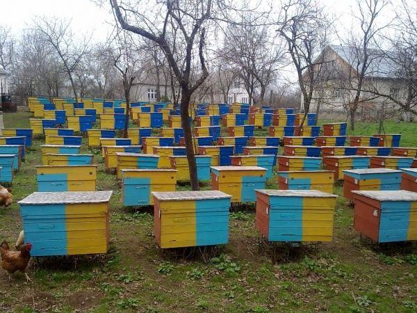продам пчелосемьи украинки