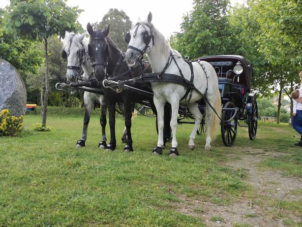 Eventos com cavalos