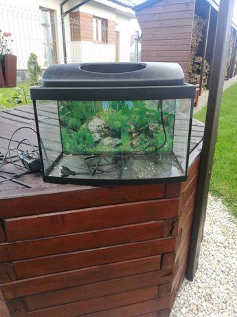 Akwarium 25-30l z wyposażeniem