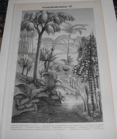SKAMIELINY III - Prehistoria oryginalne XIX w. grafiki