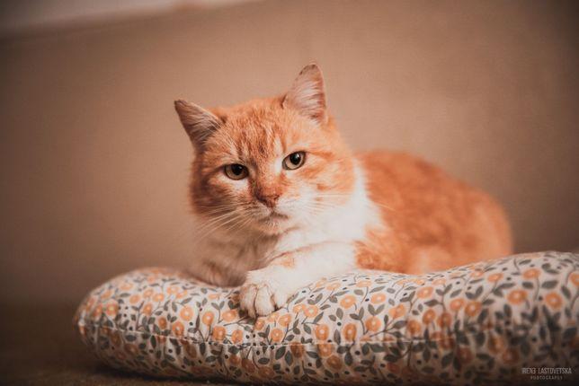Кошке Поночке нужен дом, стерилизована, привита