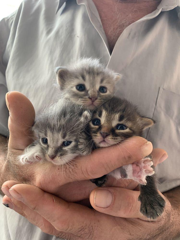 Оставшийся один котенок ищет семью