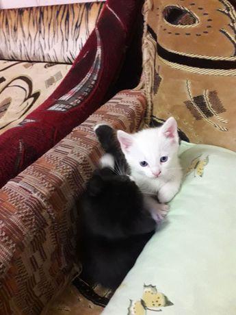Отдам в хорошие руки домашних котят