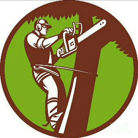 Зрізання небезпечних дерев. Дешево.