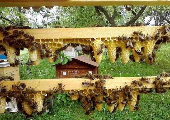 Бджолопакет Степная (УС) С доставкой в Гнивань! Цена снижена!