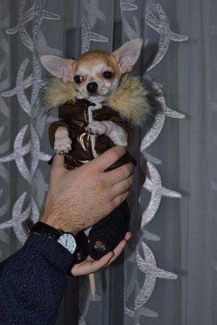 Куртка (комбинезон) для собачки