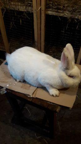 Кролики НЗБ не дорого