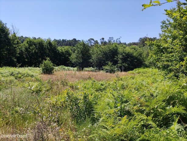 Terreno agrícola com 3.500 m2 em Revelhe
