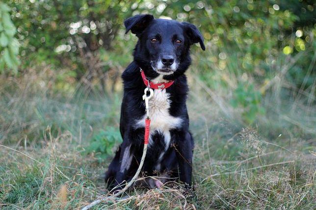 Cygan - pies do adopcji