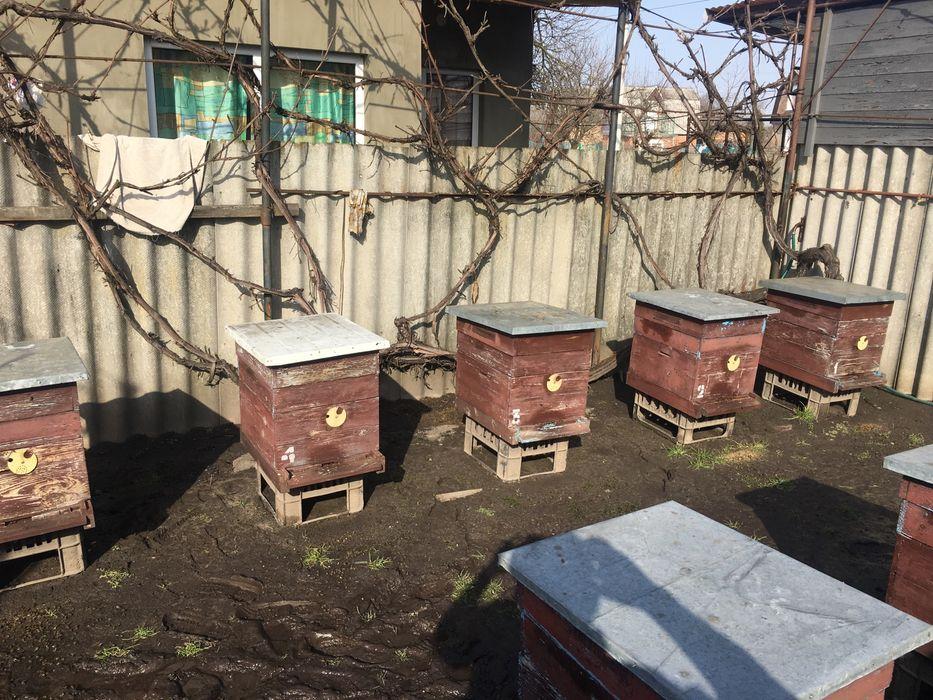 Продам пасіку Нововолынск - изображение 1