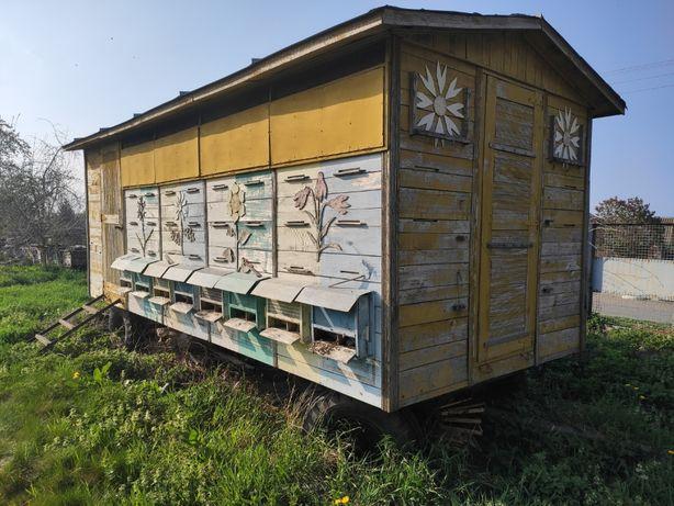 бджолопавільйон, пасека, вулик, павільйон для бджіл, пасіка.