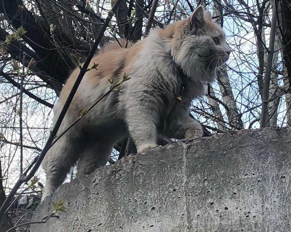 Потерялся кот. На коте синий ошейник.
