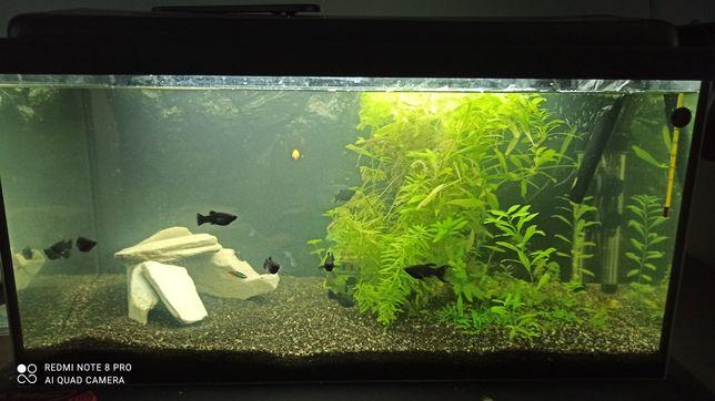 Akwarium 112 l, pełen zestaw+ rybki+rośliny +kamienie+pokarm