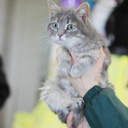 Нежнейжая девочка ищет семью котенок котята кошеня кот кошка