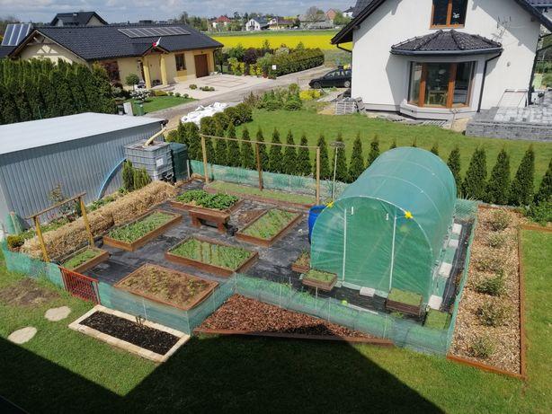 Skrzynia ogrodowa, warzywniak, inspekt
