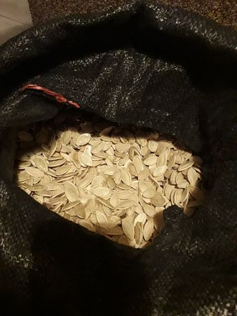 Nasiona dyni pastewnej