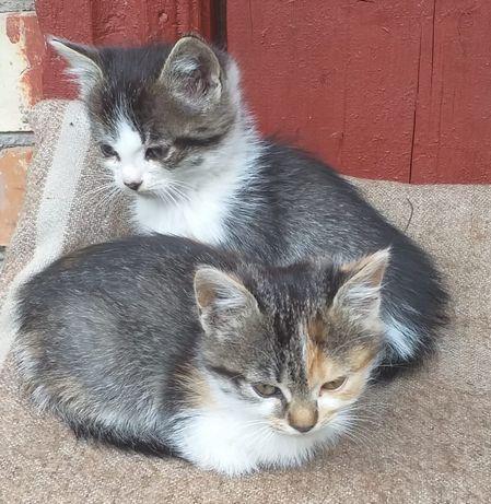 Милашки-котяшки в хорошие ручки
