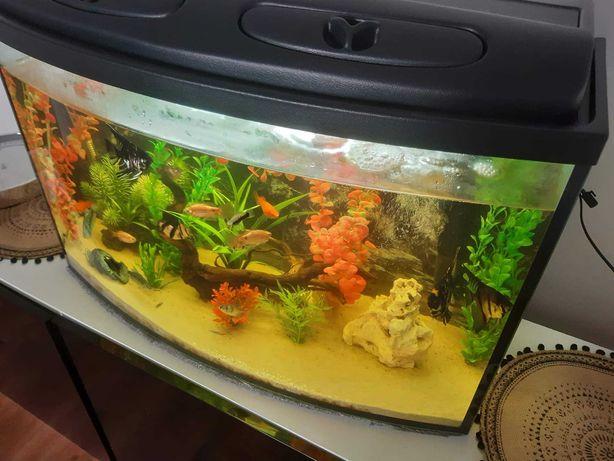 Akwarium 140l profilowane z całym wyposażeniem i życiem