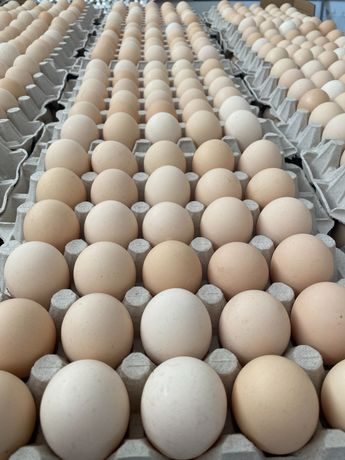 Jaja świeże Kremowe!
