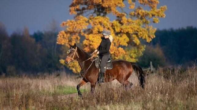Конные прогулки Киевская область