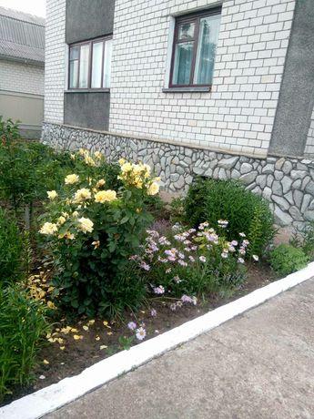 Продается дом в Овруче