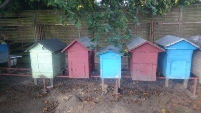 ule warszawskie poszerzane rodziny pszczele pszczoły