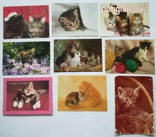 Pocztówki karnet koty domowe, kot domowy duży wybór każda inna