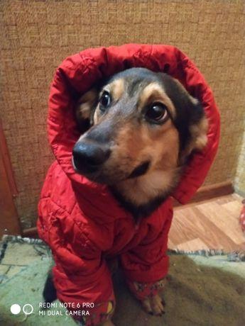 Небольшая собачка-подросток очень хочет домой!