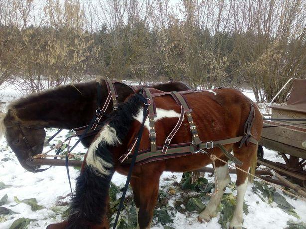шорка хама капейстра упряжь уздечка для лошадей