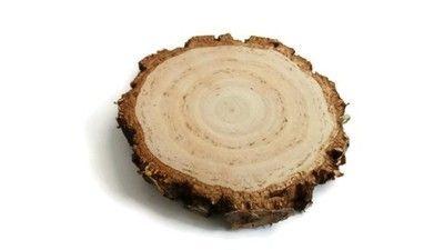 plastry drewna brzoza gruba kora 14-16 cm, gr. 2cm
