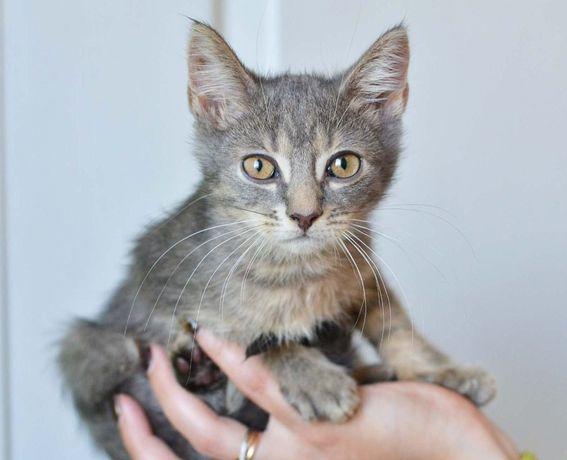 Ласковый малыш Ким (котенок, 2 мес.) - Ваш самый преданный друг!
